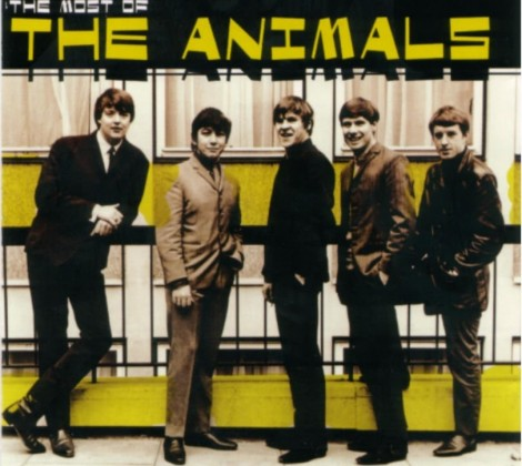 Animals – The most of the animals